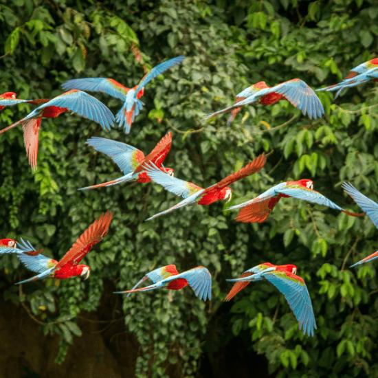 Parrot flying at the Bird Garden's Montecasino